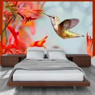 Fototapeta  Lot kolibra