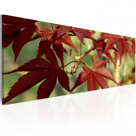 Obraz  Kolor jesieni