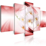 Obraz  Kwiat orchidei w różu i bieli