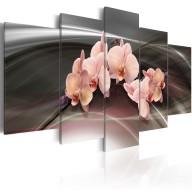 Obraz  Różowa orchidea na ciemnym tle