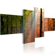 Obraz  Promyki słońca pośród drzew