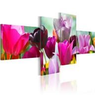 Obraz  Czar różowych tulipanów