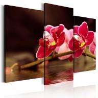 Obraz  Orchidea nad taflą jeziora