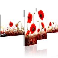 Obraz  Pole czerwonych maków na białym tle