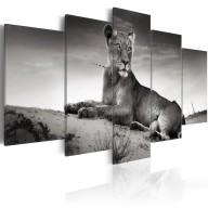 Obraz  Lwica na pustyni