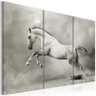 Obraz  Biały koń w ruchu