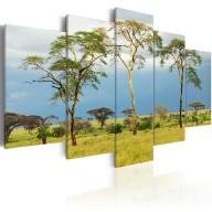 Obraz  Roślinność Afryki