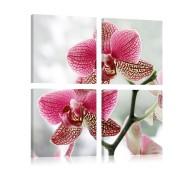 Obraz  Fantazyjna orchidea
