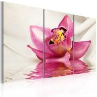 Obraz  Unusual orchid  triptych