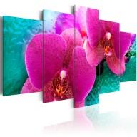 Obraz  Exotic orchids