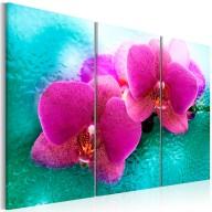 Obraz  Turkus i orchidea