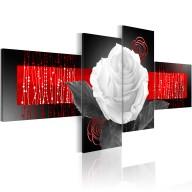Obraz  Historia róży