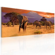 Obraz  Marsz afrykańskich słoni