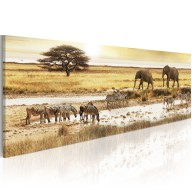 Obraz  Afryka przy wodopoju