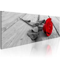 Obraz  Karminowa róża