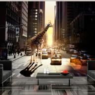 Fototapeta  Żyrafa w wielkim mieście
