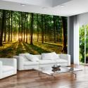 Fototapeta - Wiosna: Poranek w lesie