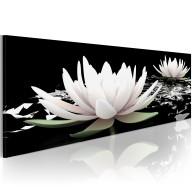 Obraz  Rejs lilii