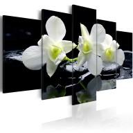 Obraz  Melancholijne orchidee