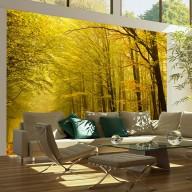 Fototapeta  Droga przez jesienny las