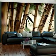 Fototapeta  Fog and bamboo forest
