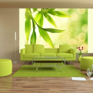 Fototapeta  Zielone liście bambusa