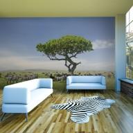 Fototapeta  Afryka zebry w cieniu drzewa