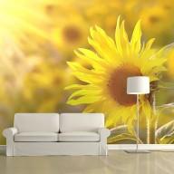 Fototapeta  Skąpane w letnim słońcu słoneczniki