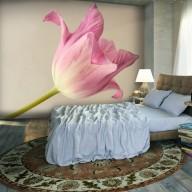 Fototapeta  Pink tulip