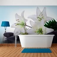 Fototapeta  Czyste, białe lilie