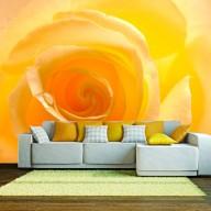 Fototapeta  Żółta róża