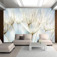 Fototapeta  Abstrakcyjne tło  nasiona dmuchawca