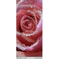 Zroszona róża