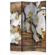 Parawan 3częściowy  Leśna orchidea [Parawan]