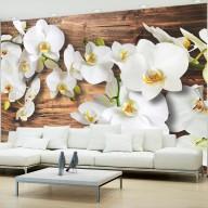 Fototapeta  Leśna orchidea