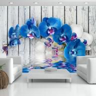 Fototapeta  Kobaltowa orchidea