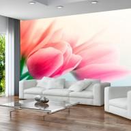 Fototapeta  Wiosna i tulipany