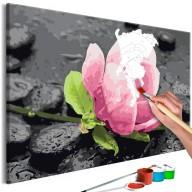 Obraz do samodzielnego malowania  Różowy kwiat i kamienie