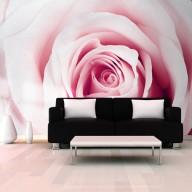 Fototapeta  Różany labirynt