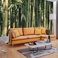 Fototapeta  Bambusowa egzotyka