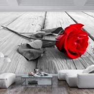 Fototapeta  Porzucona róża