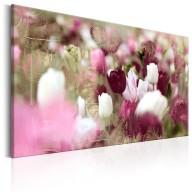 Obraz  Łąka tulipanów