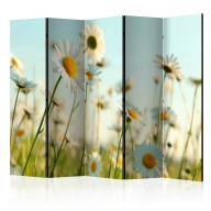Parawan 5częściowy  Stokrotki  wiosenna łąka [Room Dividers]