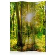 Parawan 3częściowy  Promienie lasu [Room Dividers]