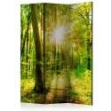 Parawan 3-częściowy - Promienie lasu [Room Dividers]