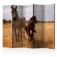 Parawan 5częściowy  Koń i źrebię II [Room Dividers]