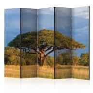 Parawan 5częściowy  Afrykańska akacja  Park Narodowy Hwange, Zimbabwe II [Room Dividers]