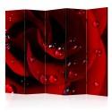 Parawan 5-częściowy - Czerwona róża i krople rosy II [Room Dividers]
